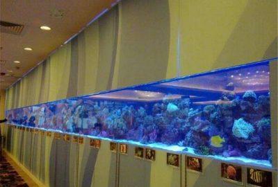 亚克力鱼缸保养价格/亚克力鱼缸清洗养护