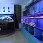 亚克力鱼缸维生系统是由六大部分组成以及工艺原理