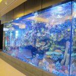 亚克力鱼缸与普通鱼缸的区别在哪