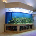 亚克力鱼缸和普通鱼缸有什么不同呢?