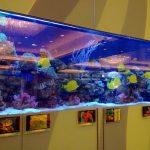 亚克力鱼缸的材料是什么
