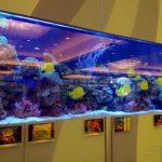 如何定制大型观赏鱼缸