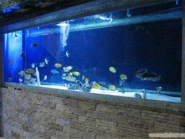 有机玻璃鱼缸定做2