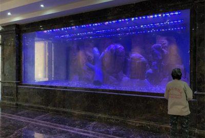 紫色亚克力鱼缸定做