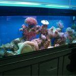 上海亚克力鱼缸|鱼缸定做电话|鱼缸定做价格