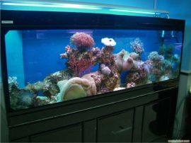 上海亚克力鱼缸 鱼缸定做电话 鱼缸定做价格
