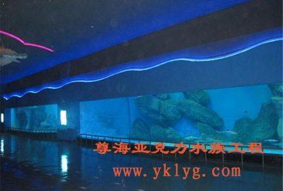上海鱼缸订做-松江鱼缸订做