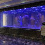 上海市亚克力鱼缸养护|清洗|包月养护