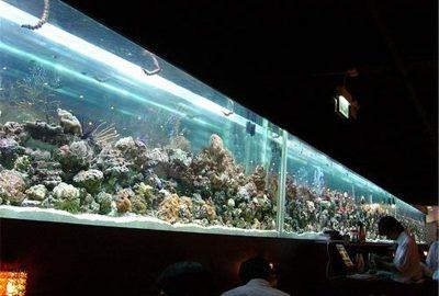 亚克力鱼缸-鱼缸定做-大型鱼缸设计-大型亚克力鱼缸厂家