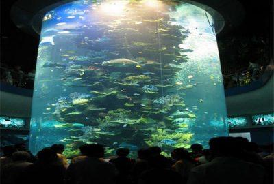 大型亚克力鱼缸制作