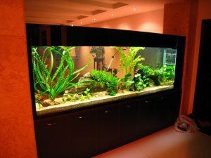 大型观赏鱼缸应该怎么定制