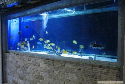 有机玻璃鱼缸定做
