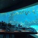海洋主题餐厅_认准珊瑚亚克力鱼缸_定做/设计/安装/售后