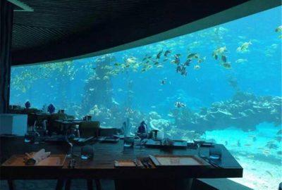 海洋主题餐厅_认准尊海亚克力鱼缸_定做/设计/安装/售后