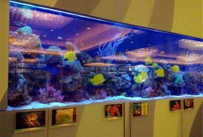 酒店观赏鱼缸设计
