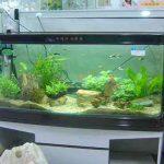 亚克力鱼缸清洁保养怎么做?