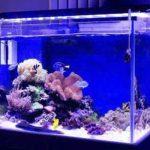 亚克力鱼缸比玻璃鱼缸质量如何?