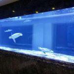 大型亚克力鱼缸材质简介