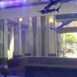 河南许昌海水鲨鱼缸